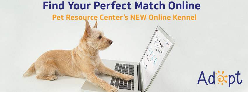 Adopt at Pet Resource Center's Online Kennel